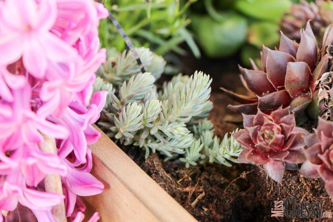 LIFESTYLE Hello Spring - In meinem Garten zieht der Frühling ein, Miss Classy, miss-classy.com, Lifestyleblog, Lifestyleblogger, Lifestyleblog Graz, Graz, Steiermark, Österreich, classy, beclassy, classy Interieur, Frühlingsdeko, Garten, Gartendeko, Blumen, Frühlingsschale, Holzkisten, Blumenampel, Schatz, Schatzsuche, Schnäppchenjagd, Schnäppchenjäger, Schnäppchenparadies, TK Maxx