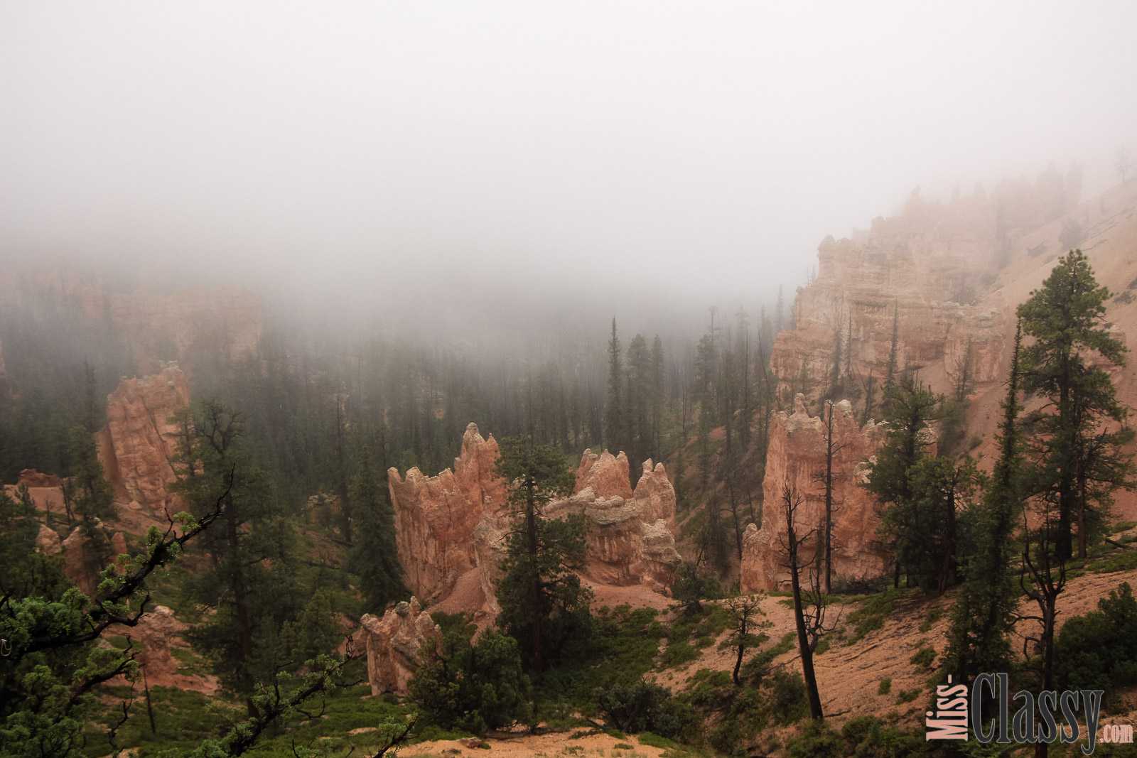 TRAVEL Bryce Canyon und Zion Nationalpark, Miss Classy, miss-classy.com, Lifestyleblog, Lifestyleblogger, Lifestyleblog Graz, Travelblog, Travelblogger, Graz, Steiermark, Österreich, classy, beclassy, Reise, Travel, Wanderlust, Wayfarer, USA, Westküste, Roadtrip, Utah, US Nationalparks, Bryce Canyon, Bryce, Best Western, Best Western Plus Ruby's Inn, Ruby's Inn, Zion Nationalpark, Zion Lodge, Emerald Pools, Las Vegas, Dixie National Forest, Red Canyon