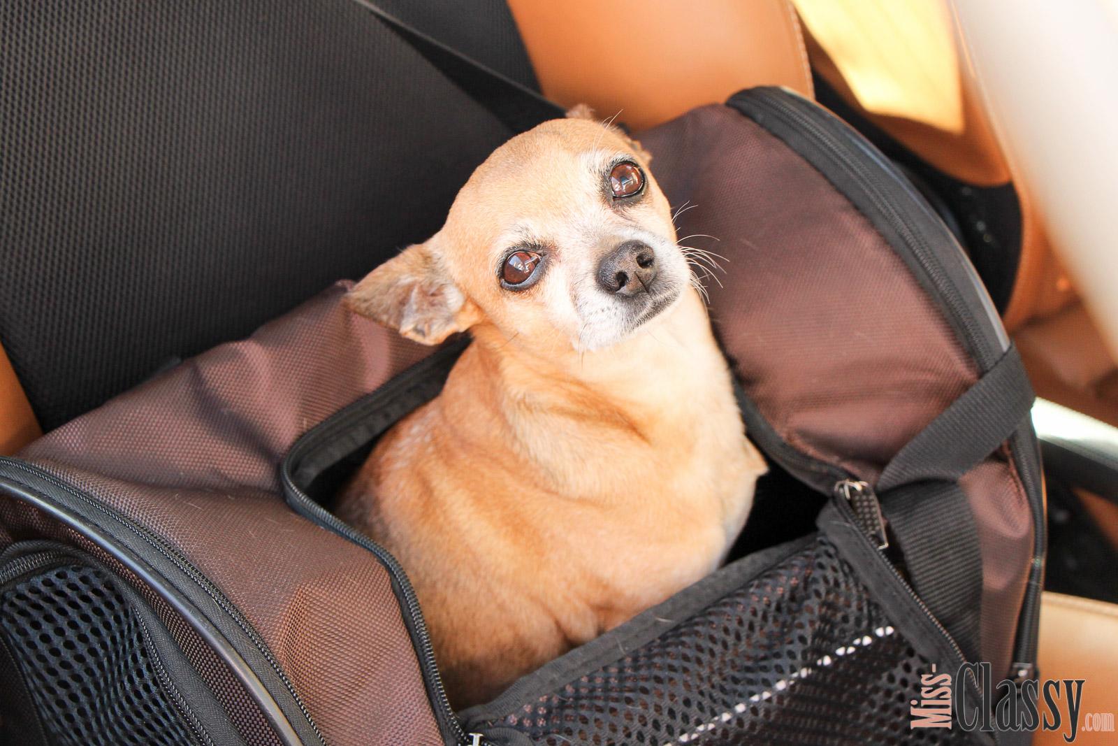 TRAVEL Verreisen mit dem Hund, Miss Classy, miss-classy.com, Lifestyleblog, Lifestyleblogger, Lifestyleblog Graz, Travelblog, Travelblogger, Graz, Steiermark, Österreich, classy, beclassy, Reise, Travel, Wanderlust, Wayfarer, Reise mit Hund, Reise mit Haustier, Hund, Dog, Chihuahua, ChiChi