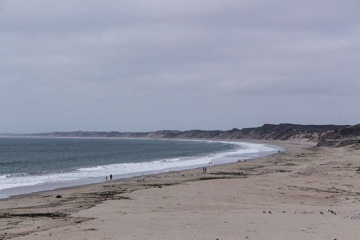 Monterey und Whale Watching in der Monterey Bay, Spaziergang am Monterey State Beach, USA, Reise Blog, Reisebericht, Westküste, Roadtrip, Kalifornien, Miss Classy