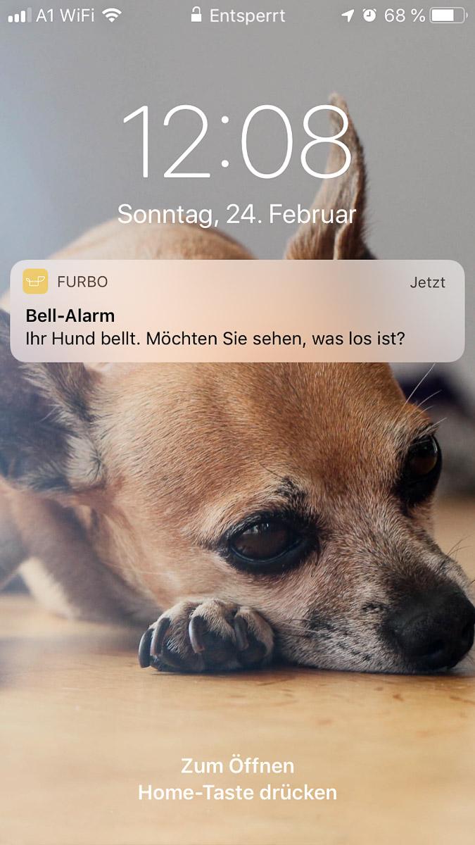 Furbo Hundekamera, App, Bell-Alarm