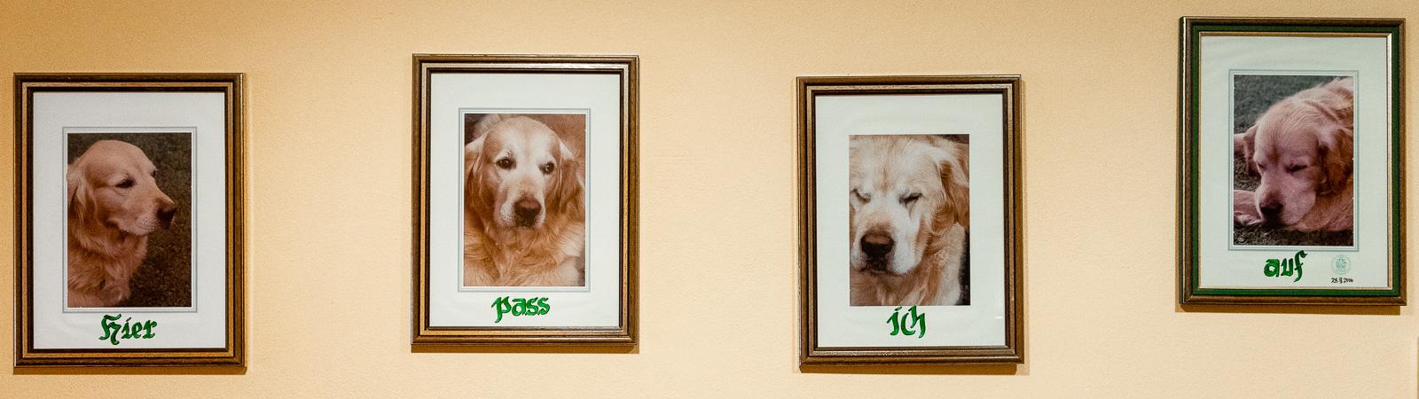 Haushund Henry, Hotel Teichwirt - Erholung im Naturpark Almenland am Teichalmsee // Teichalm, www.miss-classy.com #hotelteichalm #teichalm #natur