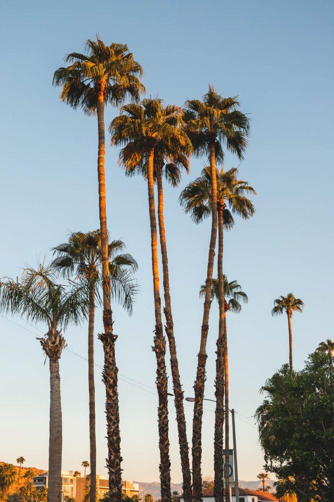 Palmen, Palm Springs