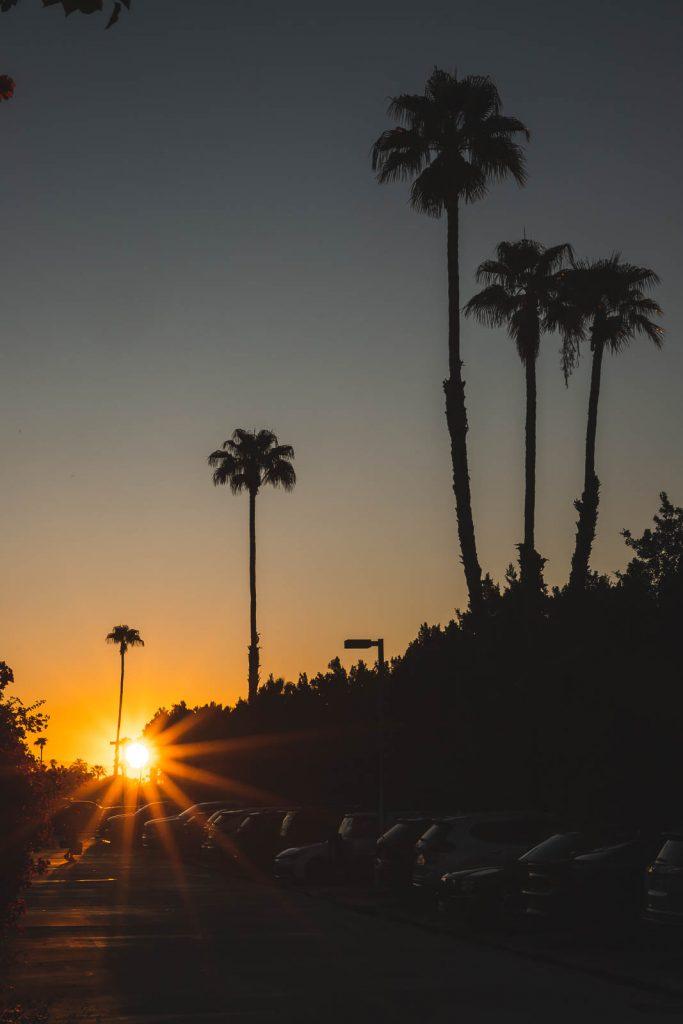Palmen, Sonnenaufgang, Palm Springs