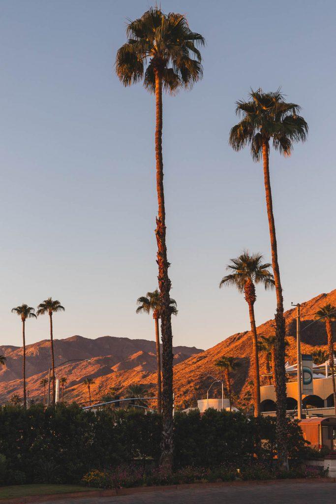 Palmen, Sonnenuntergang, Palm Springs
